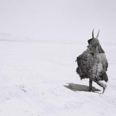2004_buffalo-boy_shaman-exterminator_14_adrian-stimson